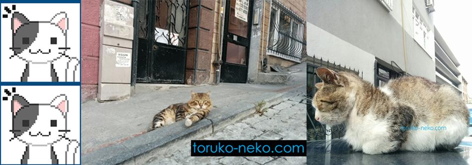 トルコ イスタンブールで、黒猫とトラ猫が車の上で休んでいる画像 | トルコ猫歩きブログ 絶対役に立つ海外旅行・海外生活・留学情報ガイド。円 リラ為替 治安 航空券 クレジットカードなど