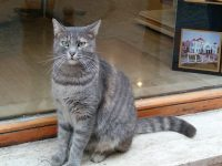トルコのカワイイ猫ちゃんの画像