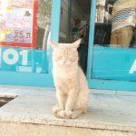 Turkish Cat トルコ イスタンブールのスーパーマーケ―ットの出口で両目ウィンクをするベージュ色の綺麗でかわいらしい猫の写真