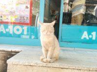 トルコのネコの画像。スーパーマーケットの出口で両目ウィンクをしてくれる猫