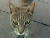 トルコの可愛い猫の画像