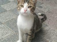 トルコ・イスタンブールの子猫ちゃん その目で見つめられると。。。