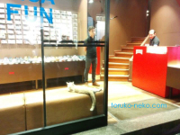 トルコイスタンブールの靴屋さんの唯一のお客様が猫な件