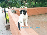 猫公園マチカパークでトルコ猫歩き。今回はどんな画像?