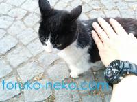 トルコの猫は猫好きな人かどうかがわかるのかな?