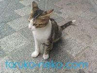 トルコの子猫は可愛いのなんの。子猫が横を向いている画像