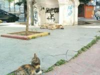 トルコ語では、犬猿の仲のことを犬猫の仲という。犬猫の画像あり