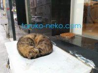 トルコの猫がたっぷりのエサの前で寝ている画像