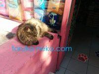 トルコの猫がペットショップの真ん前で寝ている画像