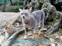 トルコの猫は毛並みがツヤツヤなのが多いのは気のせい?画像あり