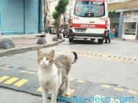 トルコの猫は救急車が来てもおじけづかない。人懐っこさ満開。