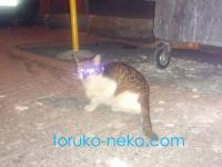 トルコの夜の猫を撮るって難しいですね!トルコに限らないか・・・?