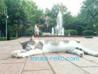 トルコの猫が歩道で、どべーって寝てる画像。可愛いね。