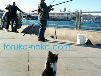トルコイスタンブールの猫がガラタ橋のたもとで釣り人からの魚を待っている画像