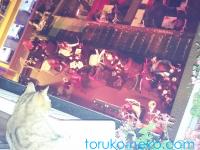トルコの猫は高い所も怖くないのか?猫カフェじゃないレストランのネコの写真
