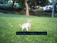 トルコイスタンブールの猫公園マチカパークで若猫はやはり積極的