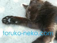 トルコ猫が歩道でお昼寝している寝顔と肉球の画像。