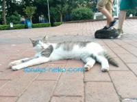 トルコの猫は、往来の激しい場所でも安心して寝る。画像あり