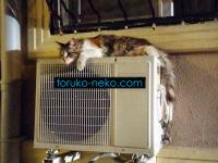 トルコの猫も熱い夏は伸びる。しかもクーラーの室外機の上で?
