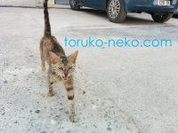 トルコのAdana アダナ Mersin メルスィンの猫がこっちに来る画像