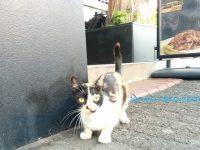ボスポラス海峡を隔てると人も猫も性格が変わるかな?