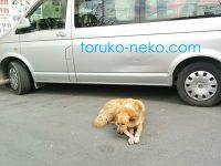 トルコのイスタンブールで犬は、おやつに本物の骨を食べる?