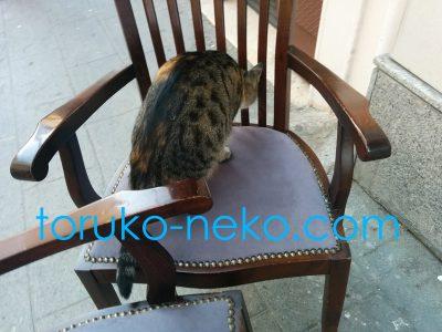 トルコ イスタンブールの猫が椅子にヒョイと乗ってきて、椅子の臭いをクンクン嗅いでいる写真 画像