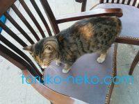 トルコイスタンブールの猫が勝手に2つの椅子にひょいと乗ってきた画像