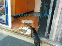 猫がお店の入り口で入りたそうに体を伸ばしている写真 画像トルコ@イスタンブール
