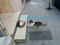 トルコで2匹の可愛い猫がじゃれている写真 画像
