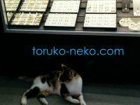 猫に小判 と 豚に真珠 は意味が異なる。どう違う?