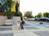 トルコ猫歩きの当ブログの記念すべき100記事目の記事