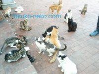 イスタンブールの猫公園マチカパークは猫が多いどころじゃない。多すぎる猫の写真 画像。