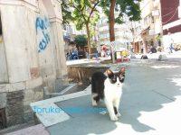 トルコのクーデターの後に可愛い猫が恐る恐る買い物に行くリオンを出迎えてくれました