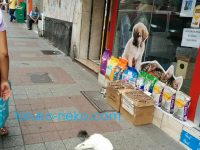 イスタンブール全体は「どこでもベッド」なのか!?猫が大通りでぐっすり寝てる