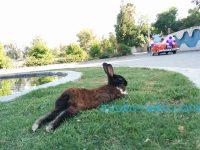 トルコのイスタンブール アダナのウサギさんの画像
