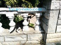 頭隠して尻隠さず みたいな猫の写真(アジア側イスタンブールで)