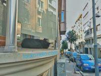 ベランダでイスタンブールの黒猫が寝ている写真 画像