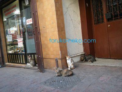 pluralcats 4匹の猫がトルコのイスタンブールでたむろしている画像 写真