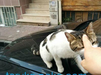 一匹の可愛い子猫が、人差し指を向けられてこちらに興味を示している画像 写真