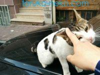どうやったらいいの?猫の可愛がり方5つのポイントを暴露しちゃいます(画像 写真あり)