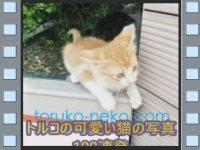 「トルコの可愛い猫の写真100連発」動画をユーチューブで公開しました