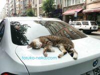 トルコの猫は車の上で寝る時にリラックスしすぎ