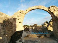 (南)キプロスに行ってみた:注意点とかは何?