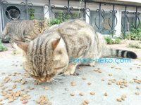 【注目】猫が喜ぶ安全なキャットフード選びは、これを見れば一発解決!