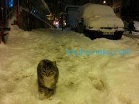 雪の積もるイスタンブールで猫ちゃんはどう暮らしているの?(雪道の猫の画像あり)