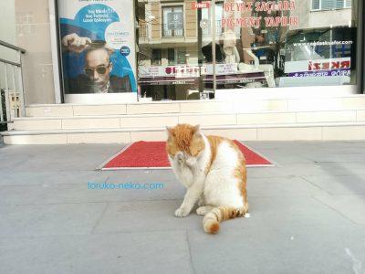 トルコ イスタンブールの薬局の前で、顔洗い 毛づくろいをする白茶色の猫の写真 画像