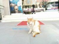 テヘッ(*´ڡ`●)っていう顔の猫の画像 写真 イスタンブール トルコで。