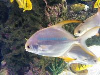 イスタンブールの水族館はどんな所?Istanbul Aquarium, İstanbul Akvaryum