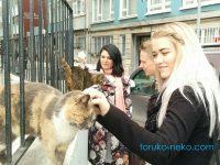 イスタンブールの日常の猫たちの写真 画像トルコ
